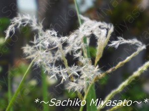 20130422susuki_gf