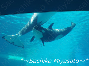 20130428nagoyakousuizokukansyachi_g