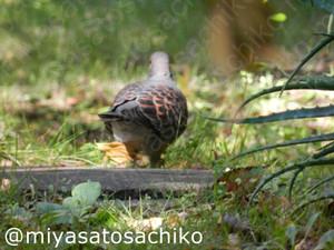 20131201kijibato_gf