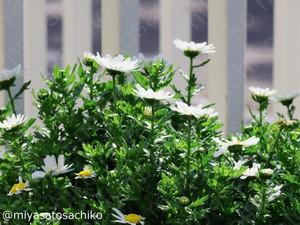 20140312flower02_gf