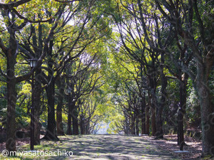 20140324forest_gf