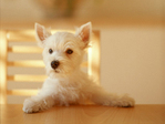Dog_mypet01