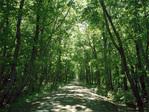 Green_road07