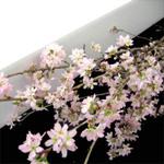 Flower_outou_eda