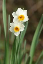 Flower_suisen01