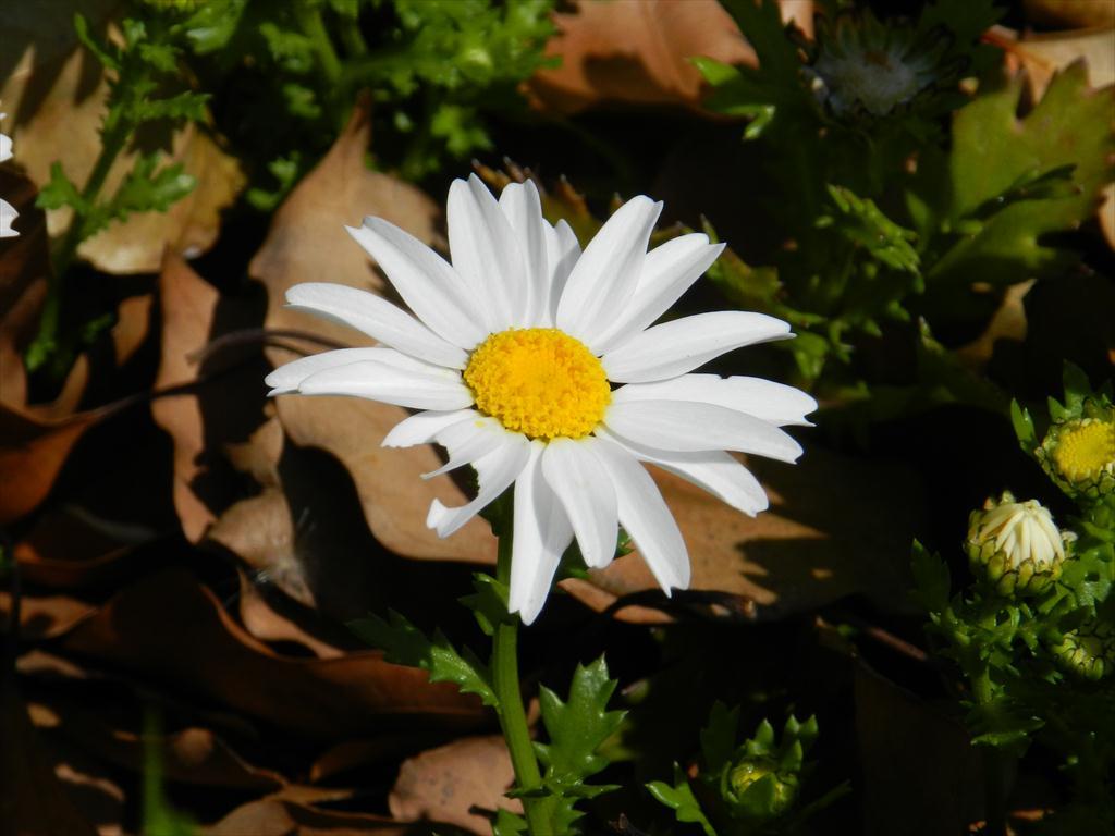 20130412flower
